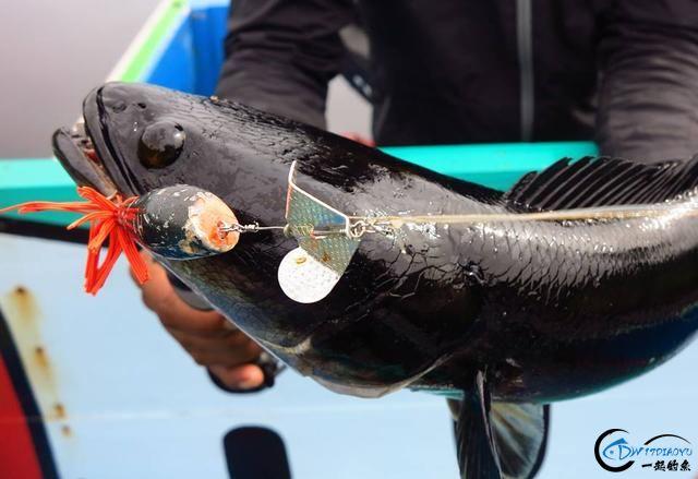 中国路亚钓鱼人远征苏门答腊,前去消灭泛滥成灾的金线多曼鱼-19.jpg