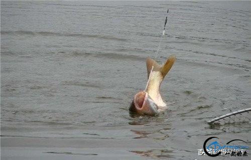 钓鱼:手竿钓鲢鳙你学会了吗-2.jpg