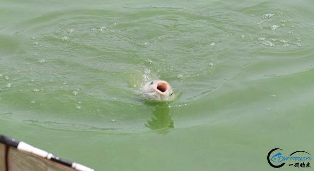 你在钓鱼时是否遇到跑鱼的现象?实战分析原因及应对办法-1.jpg
