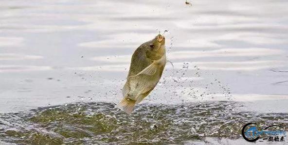 你在钓鱼时是否遇到跑鱼的现象?实战分析原因及应对办法-6.jpg