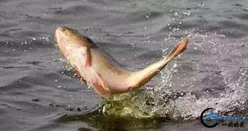 你在钓鱼时是否遇到跑鱼的现象?实战分析原因及应对办法-4.jpg
