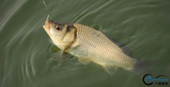 你在钓鱼时是否遇到跑鱼的现象?实战分析原因及应对办法-5.jpg