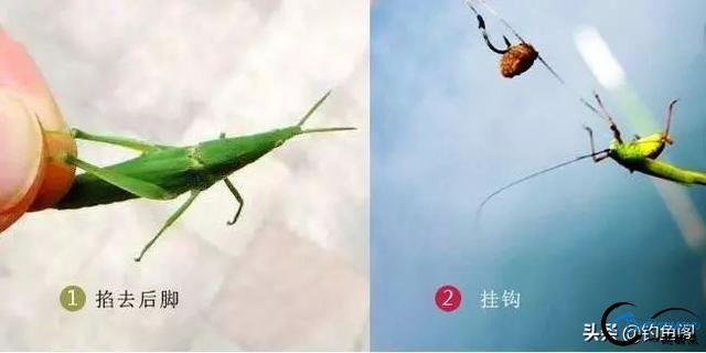 野钓常见的10种活饵:除了蚯蚓和红虫,你还用过多少?-3.jpg