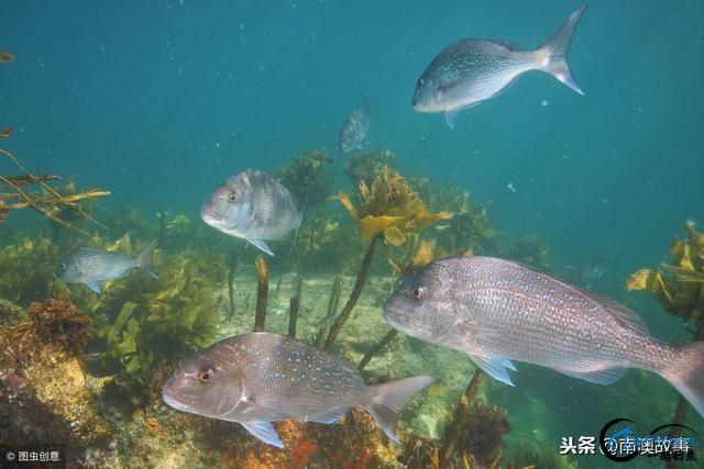 国内六处热门的钓鱼地点之首,可以岸上钓,也可以出海狂钓章红-1.jpg