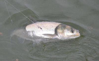 为什么钓鱼会上瘾,不是因为自制力不足,而是人类的本能驱使-4.jpg