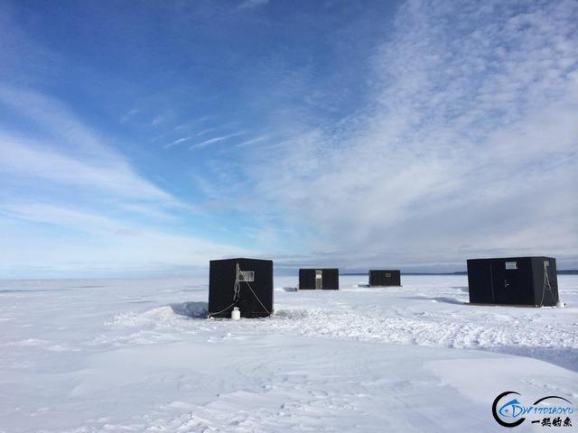 冰钓鲟鱼湾,20多条白鱼收入囊中……-3.jpg