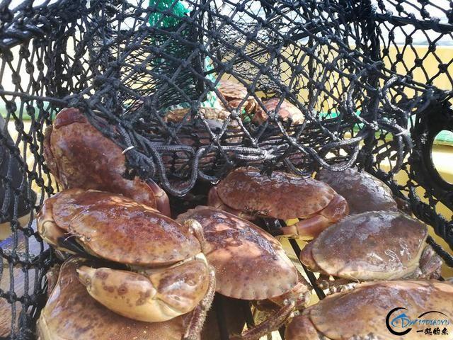 有幸目睹美味面包蟹的捕捞全过程,做成麻辣蟹我能吃一船!-5.jpg