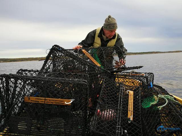 有幸目睹美味面包蟹的捕捞全过程,做成麻辣蟹我能吃一船!-4.jpg