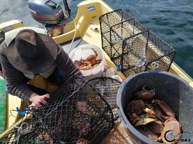 有幸目睹美味面包蟹的捕捞全过程,做成麻辣蟹我能吃一船!-6.jpg