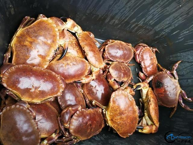 有幸目睹美味面包蟹的捕捞全过程,做成麻辣蟹我能吃一船!-9.jpg