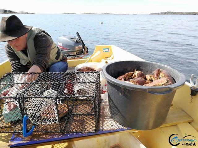 有幸目睹美味面包蟹的捕捞全过程,做成麻辣蟹我能吃一船!-7.jpg