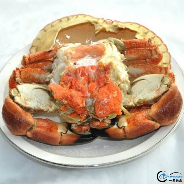 有幸目睹美味面包蟹的捕捞全过程,做成麻辣蟹我能吃一船!-11.jpg