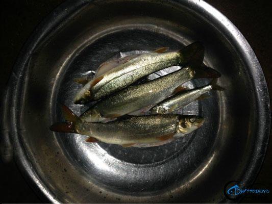 藏在深山里的细鳞鱼,算得上淡水鱼中的极品-2.jpg