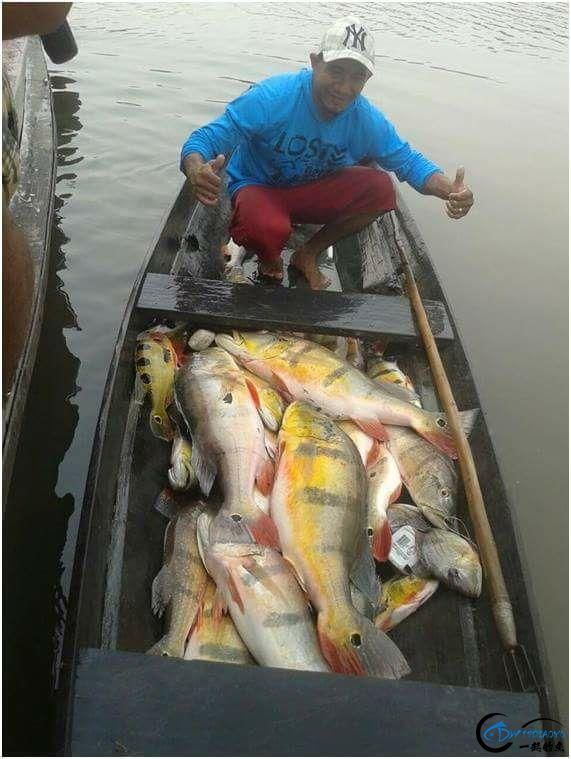 被国内观赏鱼玩家炒成天价的帝王三间,在国外生活的老凄惨了-7.jpg