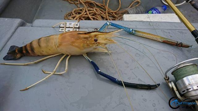 中国钓友组团去越南湄公河剿灭泛滥的罗氏虾,虾大的都成精了-4.jpg
