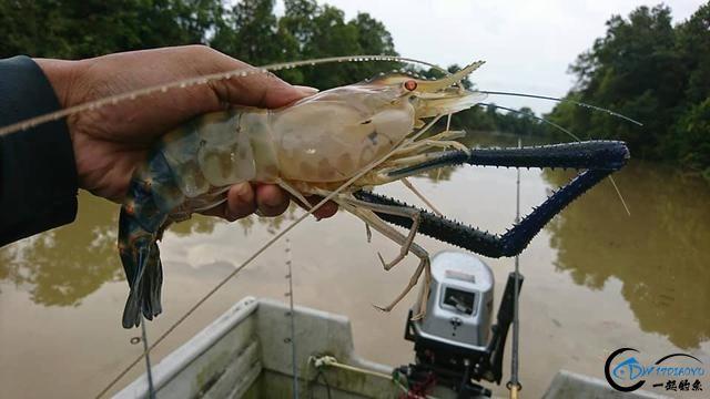 中国钓友组团去越南湄公河剿灭泛滥的罗氏虾,虾大的都成精了-7.jpg