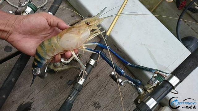 中国钓友组团去越南湄公河剿灭泛滥的罗氏虾,虾大的都成精了-6.jpg