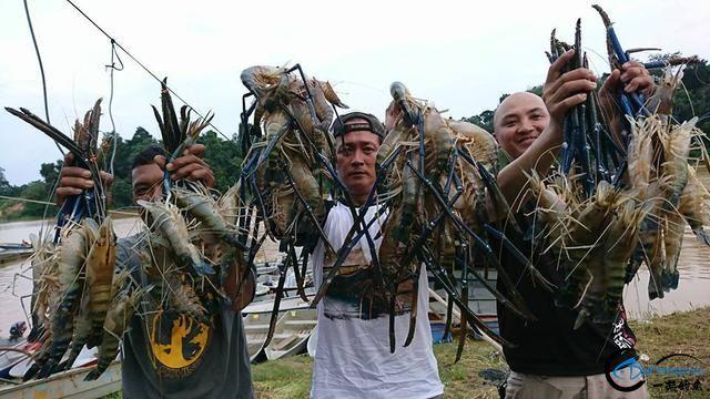 中国钓友组团去越南湄公河剿灭泛滥的罗氏虾,虾大的都成精了-1.jpg
