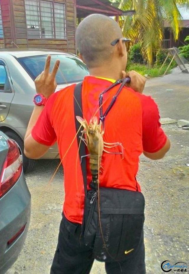 中国钓友组团去越南湄公河剿灭泛滥的罗氏虾,虾大的都成精了-11.jpg