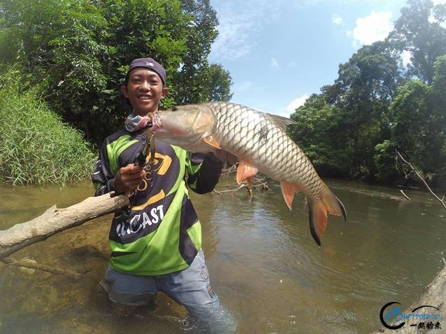 湄公河不愧是钓鱼人的天堂,各种神奇的鱼种让人眼花缭乱-3.jpg