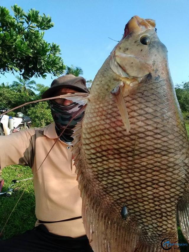 湄公河不愧是钓鱼人的天堂,各种神奇的鱼种让人眼花缭乱-5.jpg