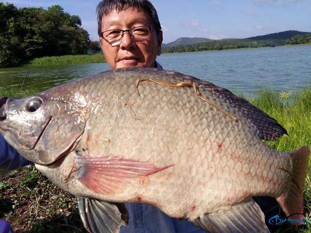 湄公河不愧是钓鱼人的天堂,各种神奇的鱼种让人眼花缭乱-6.jpg