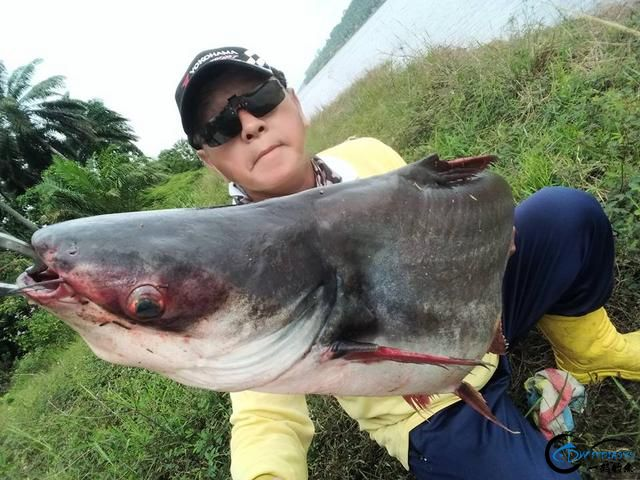 湄公河不愧是钓鱼人的天堂,各种神奇的鱼种让人眼花缭乱-15.jpg