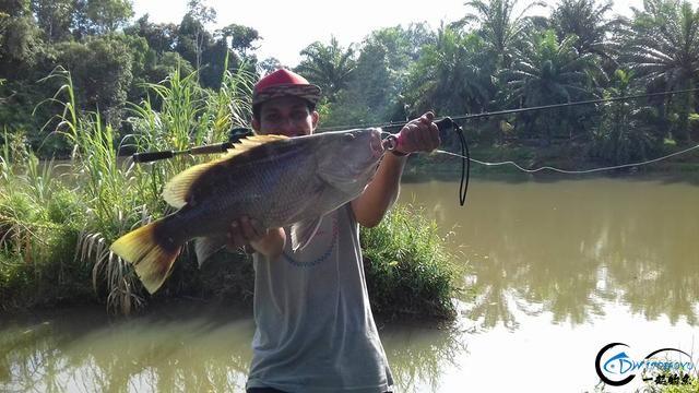 湄公河不愧是钓鱼人的天堂,各种神奇的鱼种让人眼花缭乱-18.jpg