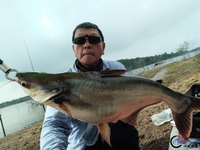 湄公河不愧是钓鱼人的天堂,各种神奇的鱼种让人眼花缭乱-11.jpg