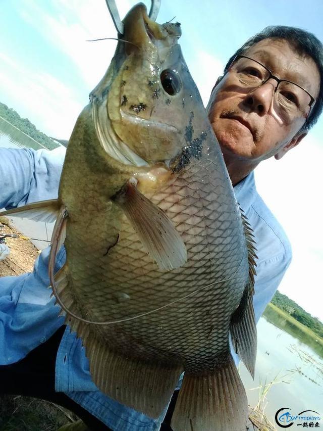湄公河不愧是钓鱼人的天堂,各种神奇的鱼种让人眼花缭乱-4.jpg