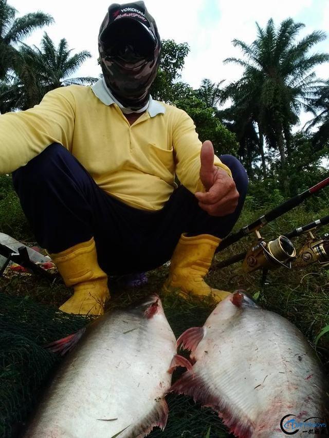 湄公河不愧是钓鱼人的天堂,各种神奇的鱼种让人眼花缭乱-13.jpg