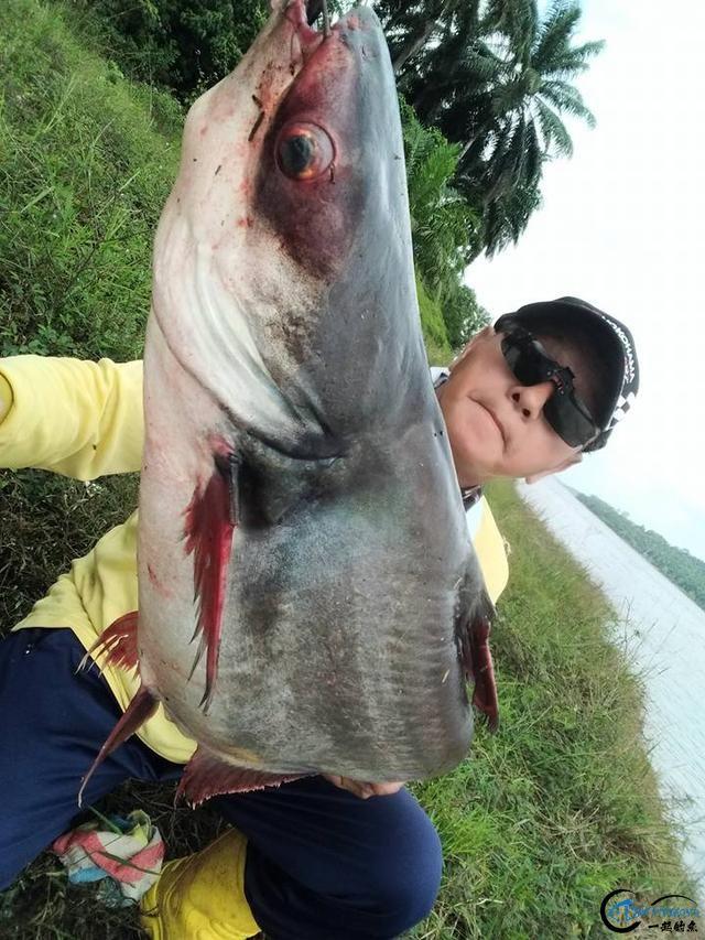 湄公河不愧是钓鱼人的天堂,各种神奇的鱼种让人眼花缭乱-14.jpg