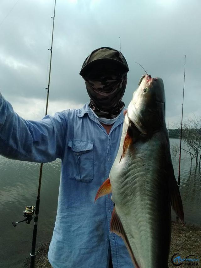 湄公河不愧是钓鱼人的天堂,各种神奇的鱼种让人眼花缭乱-12.jpg