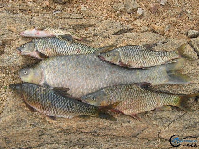 将维多利亚湖200多种鱼吃灭门的绝世凶鱼才是钓鱼人终极目标-9.jpg