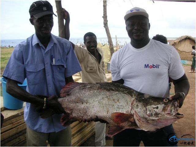 将维多利亚湖200多种鱼吃灭门的绝世凶鱼才是钓鱼人终极目标-11.jpg