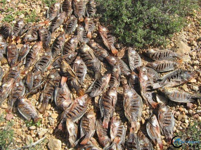 将维多利亚湖200多种鱼吃灭门的绝世凶鱼才是钓鱼人终极目标-8.jpg