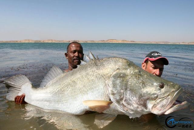 将维多利亚湖200多种鱼吃灭门的绝世凶鱼才是钓鱼人终极目标-13.jpg
