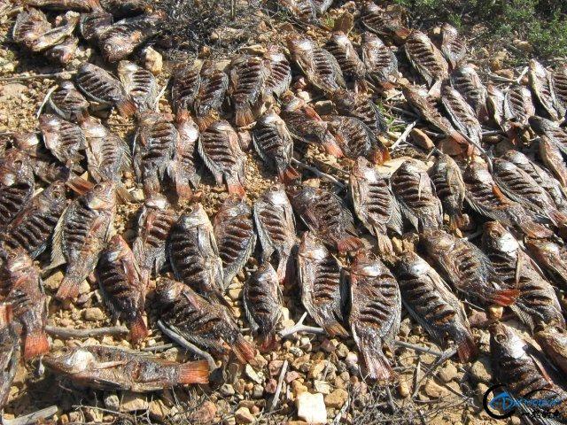 将维多利亚湖200多种鱼吃灭门的绝世凶鱼才是钓鱼人终极目标-7.jpg