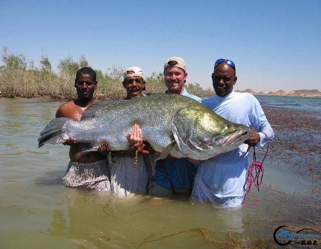 将维多利亚湖200多种鱼吃灭门的绝世凶鱼才是钓鱼人终极目标-19.jpg