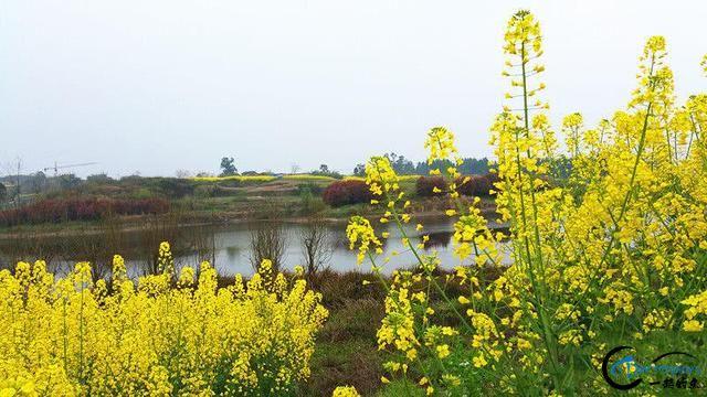 """春天在""""黄金花海""""中钓鱼是一种怎样的体验-10.jpg"""