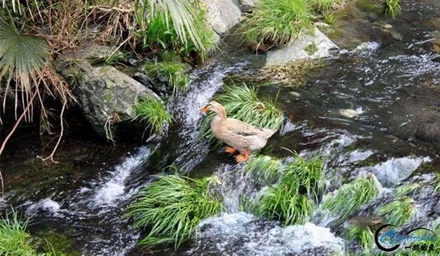 """春天在""""黄金花海""""中钓鱼是一种怎样的体验-19.jpg"""