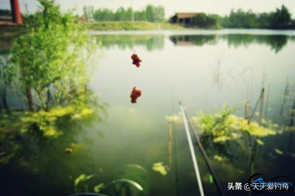 春季野钓的实用钓鱼谚语大全-3.jpg