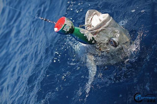 海钓就是一个坑,可是却还有无数的钓鱼人前仆后继的往前冲!-1.jpg