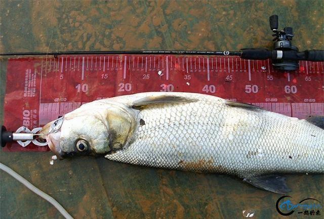 请教钓鱼人,路亚翘嘴鱼时,PE线的前导线用碳线好还是尼龙线好?-3.jpg