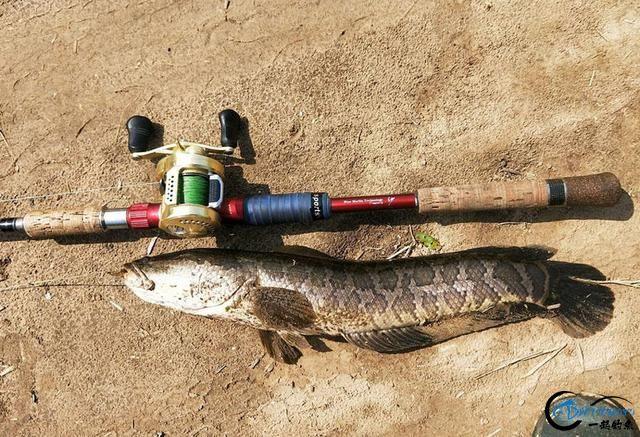 """为什么钓鱼人把这种鱼的钓法叫做""""雷强""""-22.jpg"""