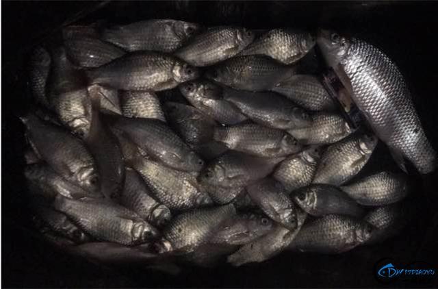 土鲮鱼应该怎么钓?新手和老手的渔获差别有点大啊!-1.jpg