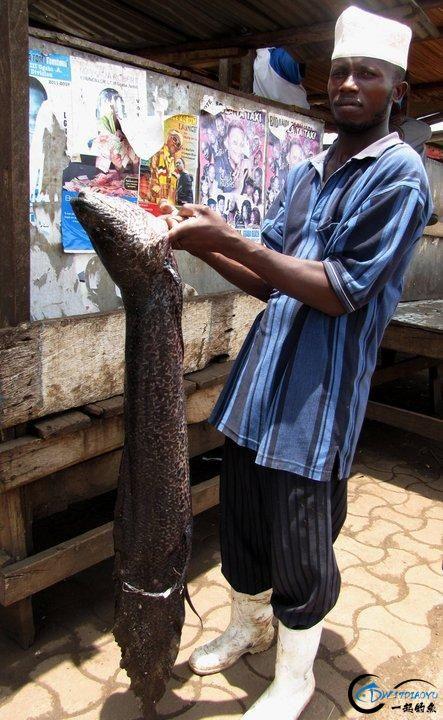 小猫种鱼的故事原来是真的!非洲人民已经开始从地里收渔获了-15.jpg