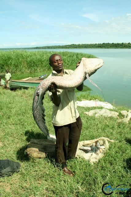 小猫种鱼的故事原来是真的!非洲人民已经开始从地里收渔获了-13.jpg