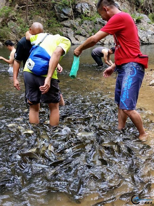 国外的鱼为啥就这么傻?竟然都不怕人,还给人做免费的鱼SPA-22.jpg