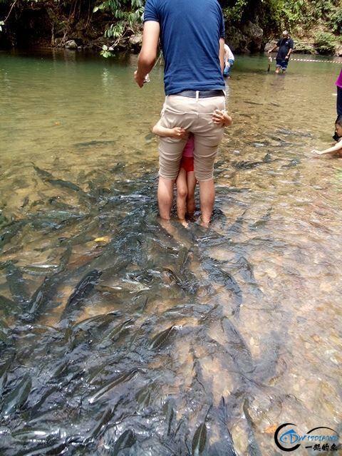 国外的鱼为啥就这么傻?竟然都不怕人,还给人做免费的鱼SPA-16.jpg